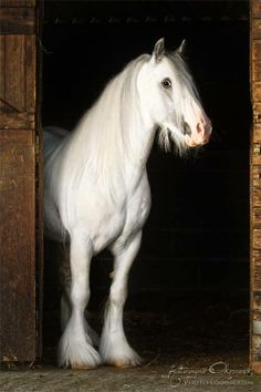 amazing and beautiful horse pictures <3