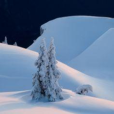 Snow Drift. Majestic.