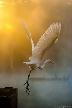 What a gorgeous shot of an egret,  taken in Tallahassee, Florida...