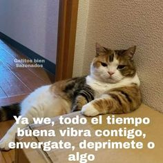 Memes, Animals, Positive Vibes, Attitude, Gatos, Thinking About You, Short Stories, Animales, Animaux