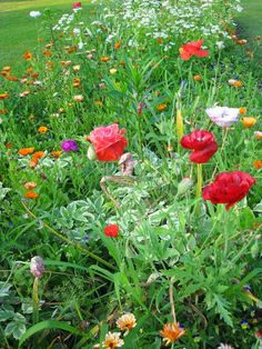 Poppy Garden in backyard--outlined with brick & raised