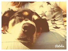 my dog love her sooooo much