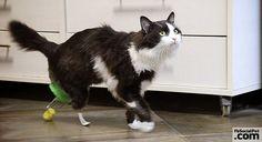 Gattino potrà correre di nuovo grazie all'innesto di un paio di gambe molto speciali | FbSocialPet.com Senza le gambe posteriori, Pooh non avrebbe più potuto camminare, correre e saltare... #Iloveanimals #Ilovepets #animalisalvati #iostoconfbsocialpet #FbSocialPet Rimani aggiornato su FbSocialPet.com