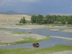 Pictures From Mongolia   mongolia common sight in mongolia mongolia alpine river mongolia a