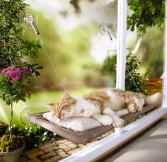 Spiffy Pet Products: Cat Products