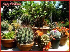 trattamento per piante grasse