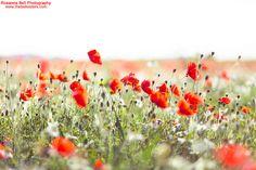 Poppy Love by Rosanna Bell, via Flickr