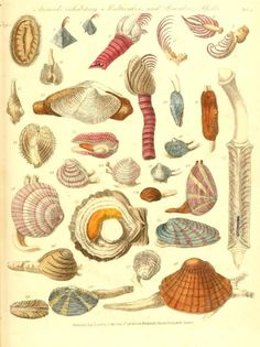 1783-88 - The genera vermium exemplified by various specimens of the animals contained in the orders of the Intestina et Mollusca Linnaei : drawn from nature - by James Barbut