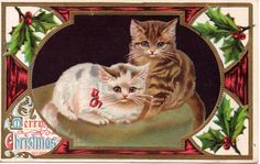 Two cute Kittens on chair an Embossed Christmas Vintage Postcard FOR SALE • $4.75 • See Photos! Money Back Guarantee. I am thinning out some of my collection of postcards. Keep watching for cards that you haven't seen in a long time. Pay Pal Only! Sorry No International Shipping Customer 352039047637