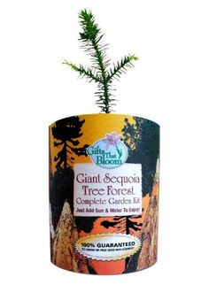 Sequoia Tree $8.95