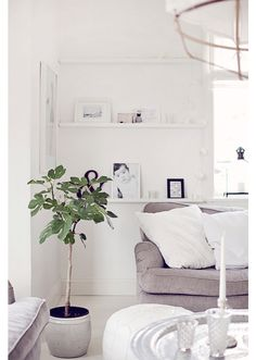Fig tree - for the corner.  White built in shelves (behind chair for a tv?  corner?)