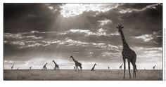 Nick Brandt great Photographer