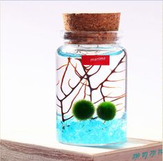 Marimo Moss Ball in a Wishing Bottle of Blue Sea/Mini Aquarium or Miniature Terrarium With Sea Fan,Glass Gravel-Wedding Favors,Wish Gifts by NewDreamWorld on Etsy https://www.etsy.com/listing/256076338/marimo-moss-ball-in-a-wishing-bottle-of