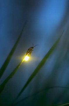 Messages Of Love And Light Beautiful Creatures, Animals Beautiful, Cute Animals, Beautiful Things, Animal Photography, Nature Photography, Catching Fireflies, Cool Bugs, A Bug's Life