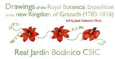 Drawings of the Royal Botanical Expedition to the Kingdom of New Granada (1783-1816), led by José Celestino Mutis (Real Jardín Botánico CSIC)