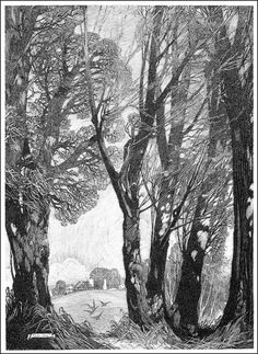 Franklin Booth, pen and ink drawing. I love the way the artist drew the tree branches. Gravure Illustration, Illustration Art, Landscape Drawings, Landscape Art, Landscapes, Franklin Booth, Ink Pen Drawings, Ink Illustrations, Pen Art