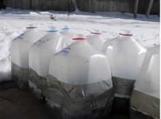 Reuse Gallon Milk Jugs to Start Seedlings for Your Garden