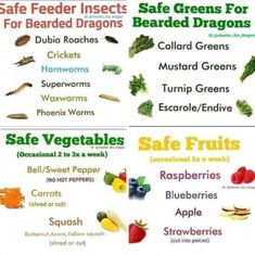 Bearded dragon foods You are in the right place about Lizards wallpaper Here we offer you the most beautiful … Fancy Bearded Dragon, Bearded Dragon Food List, Bearded Dragon Care Sheet, Bearded Dragon Cage, Bearded Dragon Vivarium, Bearded Dragon Enclosure, Bearded Dragon Terrarium, Bearded Dragon Habitat, Dragon Facts