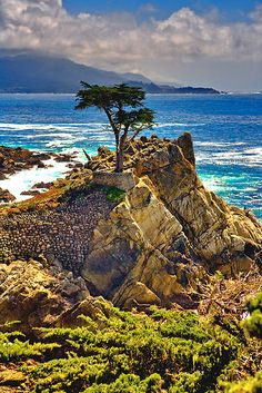 The Lone Cypress, Monterey Ca. by PhotosbyFlood 17 Mile Drive . Oh The Places You'll Go, Great Places, Places To Travel, Beautiful Places, Places To Visit, Travel Destinations, Beautiful Pictures, Paradis Tropical, California Dreamin'