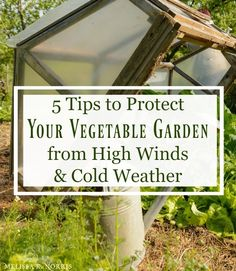 13 tips to protect your garden to grow food with harsh weather. Weather it's high winds and cooler temps, severe rain, or hot dry conditions, learn these easy hacks to keep your vegetables growing strong. Growing Winter Vegetables, Growing Veggies, Diy Garden Projects, Garden Ideas, Garden Tips, Backyard Vegetable Gardens, Starting A Garden, Organic Gardening Tips, Grow Your Own Food