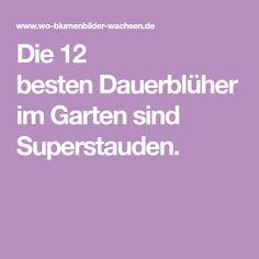 Die 12 bestenDauerblüher im Garten sind Superstauden.