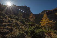 Herbst in der Axamer Lizum. Medium Art, Country Roads, Mountains, Nature, Travel, Social Media, Viajes, Traveling, Nature Illustration