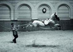 """historicaltimes: """" Spanish Riding School, Vienna, 1952 - by Hans Hammarskiöld Read More """" All The Pretty Horses, Beautiful Horses, Animals Beautiful, Horse Fly, Horse Love, Horse Riding, Horse Photos, Horse Pictures, Spanish Riding School Vienna"""