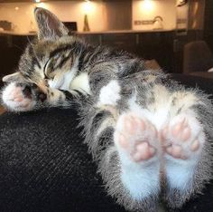 These cute kittens will brighten your day. Cats are incredible friends. Cute Cats And Kittens, Baby Cats, I Love Cats, Cool Cats, Kittens Cutest, Kitty Cats, Cutest Pets, Fluffy Kittens, Cats Bus