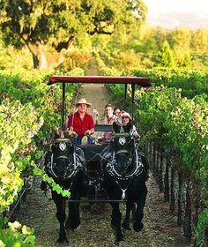 Wine Carriage tour through the vineyards, Healdsburg, Sonoma, California