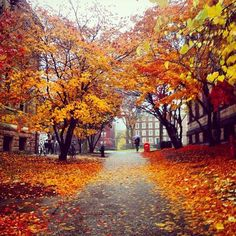 Late fall at Brown University, Providence, R. Brown University Campus, Timeline Photos, Warm Colors, Pathways, Autumn Leaves, Brown Things, Country Roads, Seasons, Nature