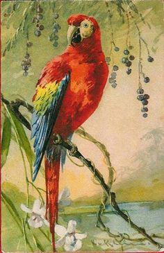 Divided Back Postcard Red Parrot Birds Watercolor Bird, Watercolor Paintings, Parrot Painting, Parrot Bird, Exotic Birds, Bird Art, Vintage Postcards, Beautiful Birds, Pet Birds