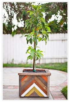 Plants + Animals >> Fruit tree in a hand made recycled wood planter box.