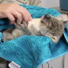 Adorable Cute Animals, Cute Baby Animals, Animals Beautiful, Funny Animal Videos, Funny Animal Pictures, Rare Animals, Animals And Pets, Animal Totems, Koalas