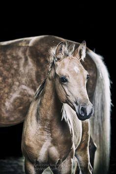 (91) Equines Studio- Katarzyna Suchecka-Stankowiak
