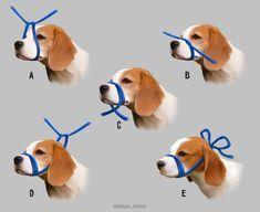 Información útil para salvarle la vida a tu gato o perro.