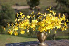 We Plant atelier & flowershop - Decoração floral para casamento na serra  Foto: Nino studio  flores - flower - cerimonia - miniwedding - boho - casamento - rustico -arranjo - flores - orquideas - oncidium