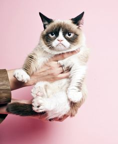 Grumpy cat photographed for TIME magazine