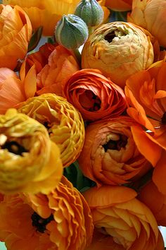 The Invasion of The Ranunculus -- Don't just think pumpkin when you think Orange!  It has a range of beautiful hues from peach to deep burnt sienna ...
