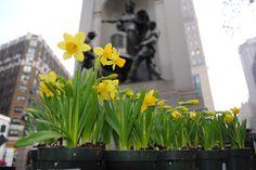 Spring 2012 planting in Herald Square Macy's Herald Square, 34 Street, Planting, Nyc, Spring, Plants, New York