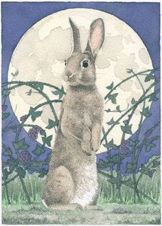 Carrie Wild is a fine artist and illustrator that creates unique ink-and-watercolor paintings of birds, bunnies, butterflies, and other creatures. Bunny Art, Cute Bunny, Art And Illustration, Rabbit Illustration, Lapin Art, Motifs Animal, Rabbit Art, Bunny Rabbit, Illustrators