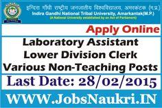 Indira Gandhi National Tribal University (IGNTU) Recruitment : Assistant & Various Non-Teaching Posts Last Date : 28/02/2015