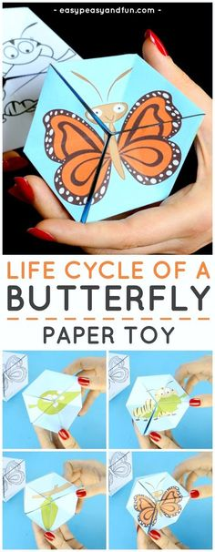 Printable Butterfly Life Cycle Paper Toy