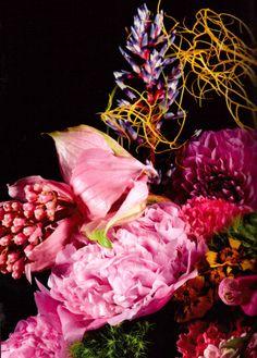 Makoto Azuma: Encyclopedia of Flowers