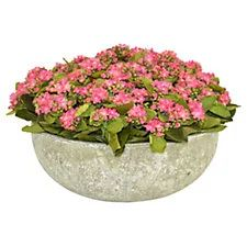 """18"""" Pink Kalanchoe in Bowl, Faux"""