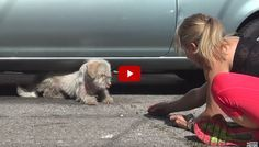 The terrier had been living under cars for seven months. Rescued!