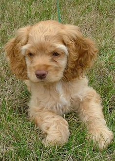 Pictures of Puppy Dogs
