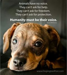 Animals have no voice. Humanity must be their voice.