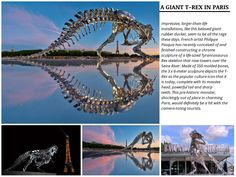 A Giant T-Rex in Paris - Created on Tactilize