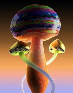 Magic Mushroom Image, Mushroom Images, Mushroom Pictures, Mushroom Art, Mushroom Wallpaper, Fern Gully, Poisonous Mushrooms, Broken Glass Art, Plant Fungus