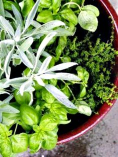 How to Make a One-Pot Indoor Herb Garden (You can grow these in winter too if you have enough winter sunlight)